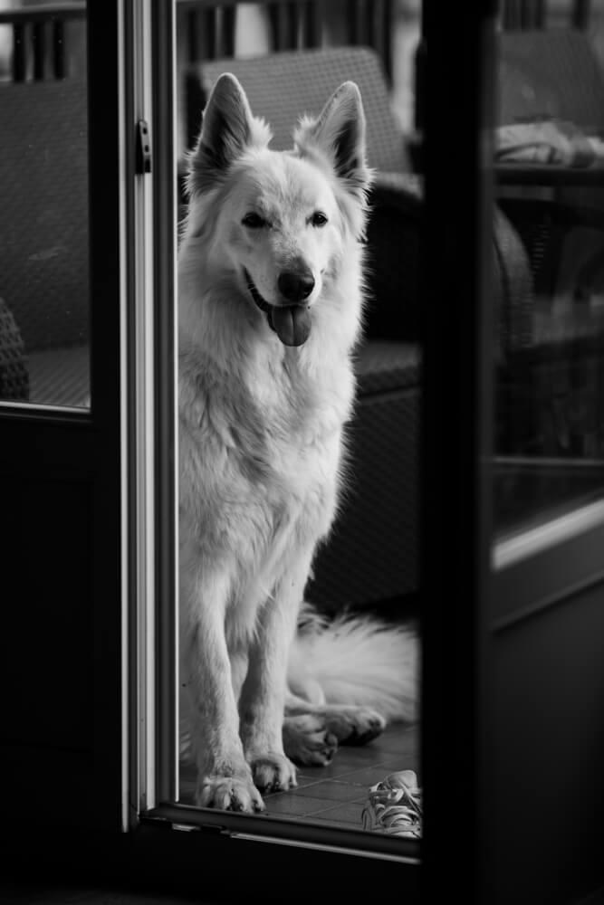 Photographe moselle j32 6