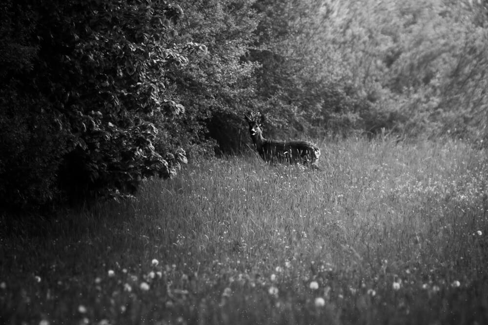 Photographe moselle j43 9